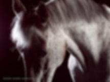 Itsy - Appaloosa - spotty pony