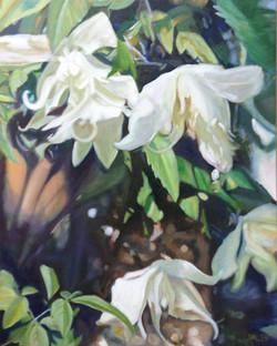 White Swans (Clemantis) *