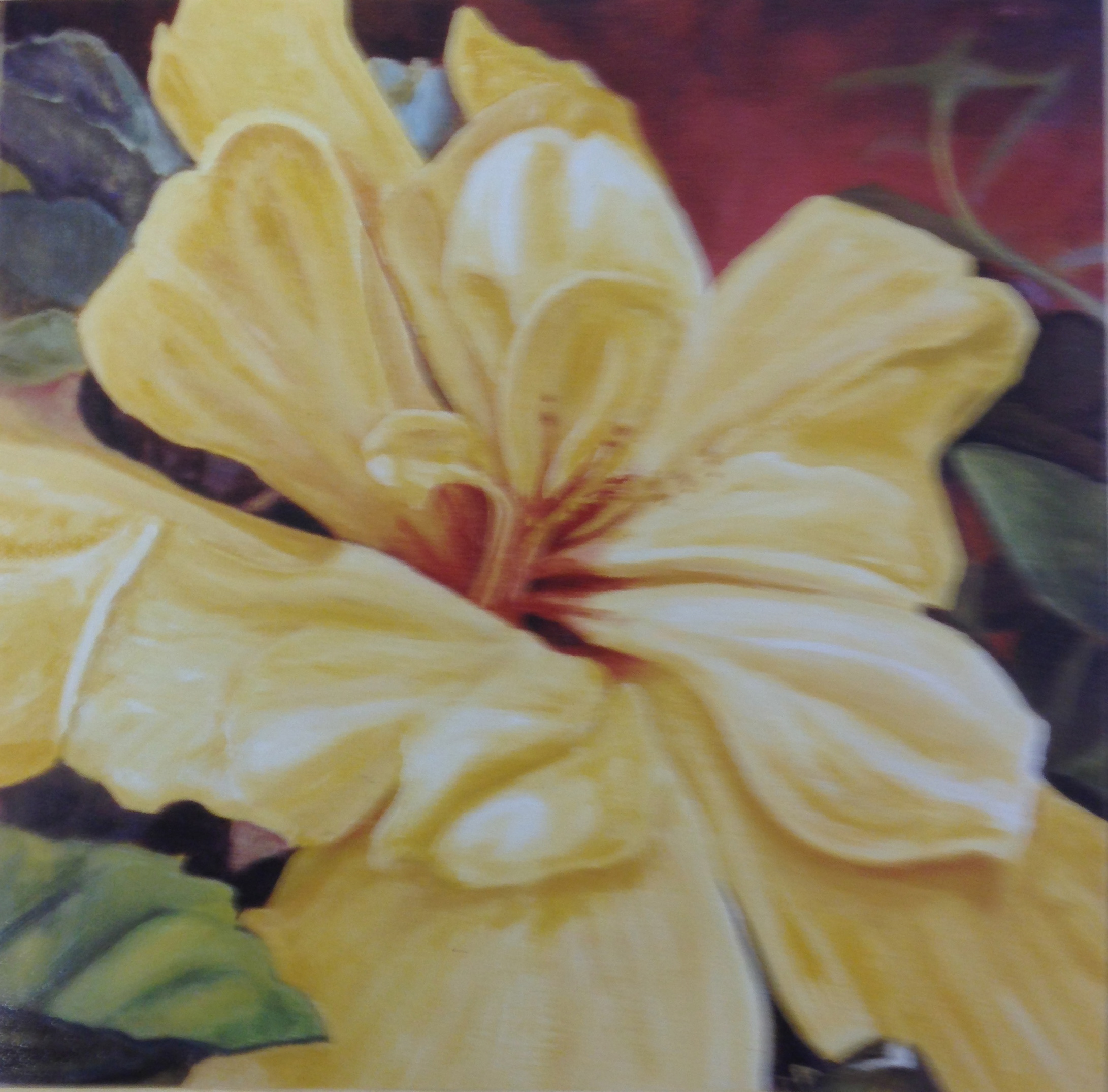 Yellow Hibiscus *