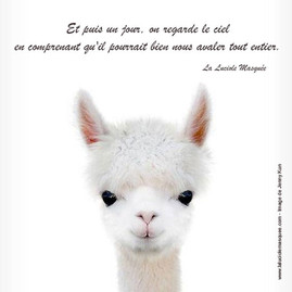 Citation_Luciole_Masquee_8.jpg