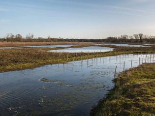 Floodplain Forest Nature Reserve, Old Wolverton 1