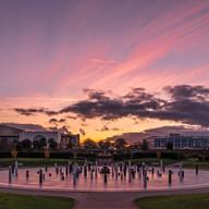 MK Rose Sunset.jpg