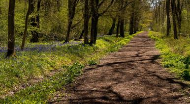 Howe Park Wood 2
