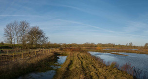 Floodplain Forest Nature Reserve, Old Wolverton 3