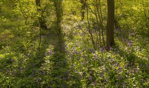 Howe Park Wood 6