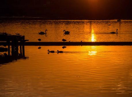 Willen Lake 31