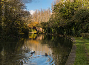 Grand Union Canal 16