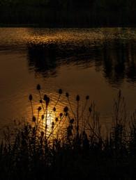 Caldecotte Lake 4