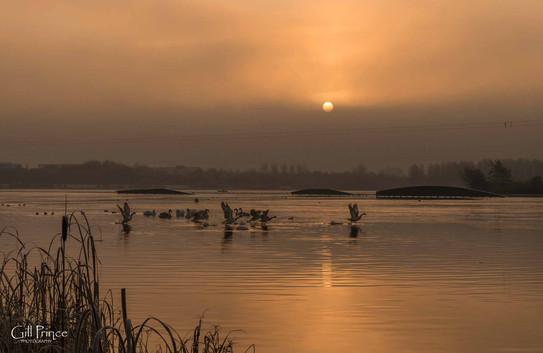 Willen Lake 42