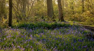 Howe Park Wood 5