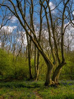 Howe Park Wood 3