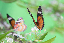 2__ButterflyHouse_ChangiAirport_71A4928