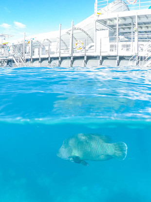 Sunlover by Starlight: Sunlover Reef Cruises