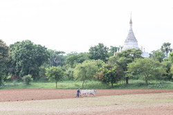 33_Bagan_IMG_5355