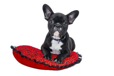 Puppy%20in%20Red%20Cushion_edited.png