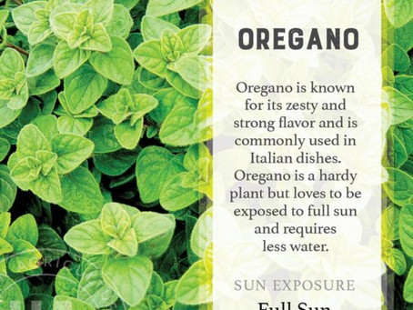Oregano Essential Oils and the benefits!!