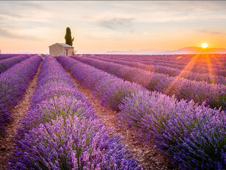 Great uses for our 10 Core Oils starting with Lavendar