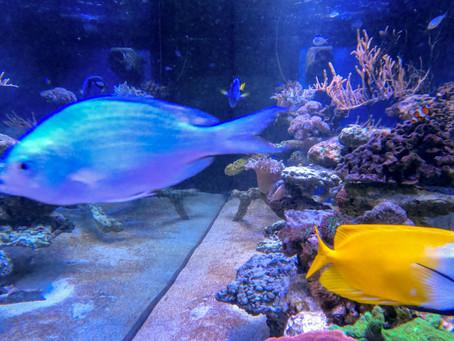 Direkt aus dem Aquarium