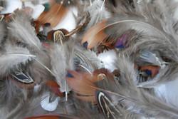plumes avant traitement