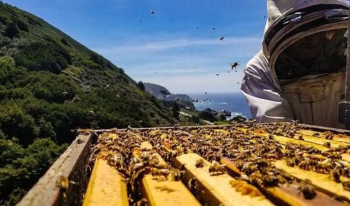 what is honey banner.jpg