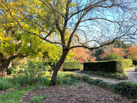 South London's parks