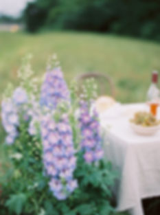 delphinium wildflower dinner