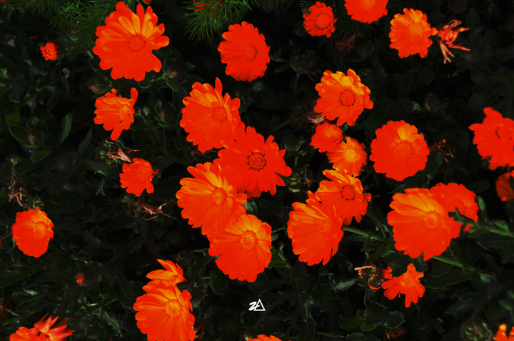 S09_3817 (FLOWER).png