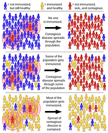 Covid 19 and Herd Immunity? The War between the Human and the Virus