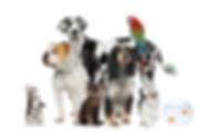 animalgroup_3253ed2069e24f0698318e43c49f
