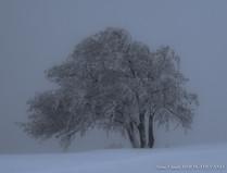 Arbre à neige