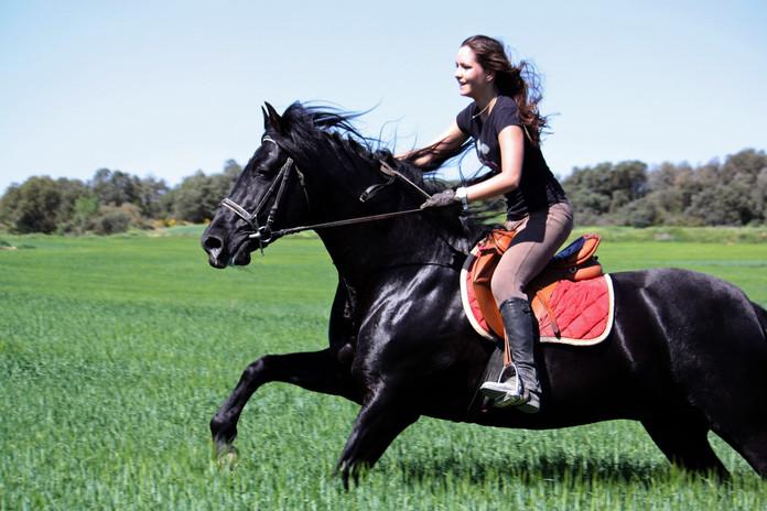 Photographe chevaux -71.jpg