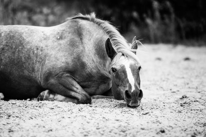 Photographe Equestre 13.jpg