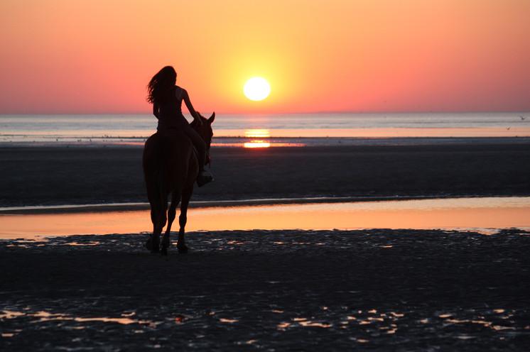 Photographe Equestre 95.jpg