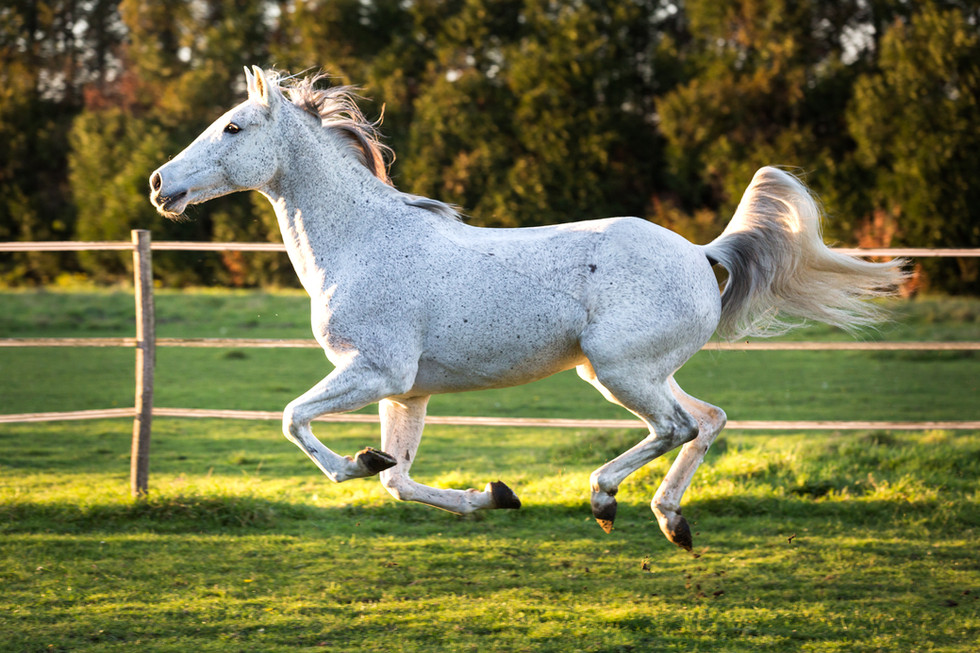 Photographe Equestre 01.jpg