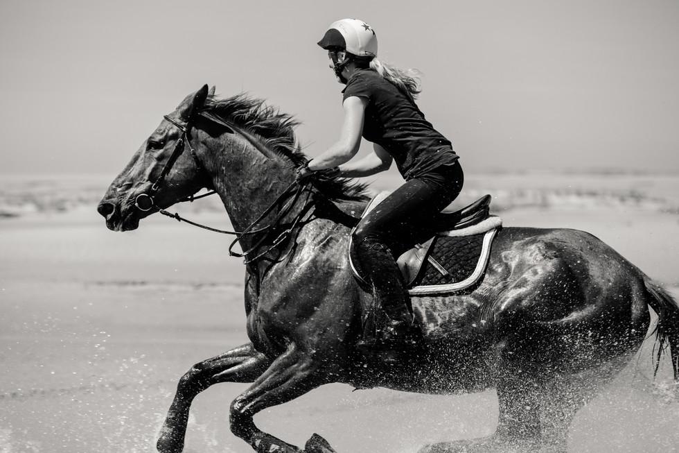 Photographe Equestre 20.jpg