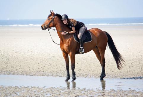 Photographe Equestre 98.jpg