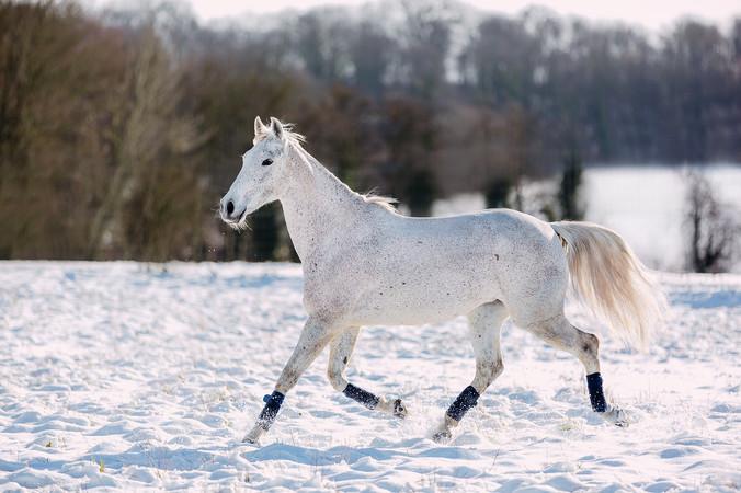 Photographe Equestre 73.jpg