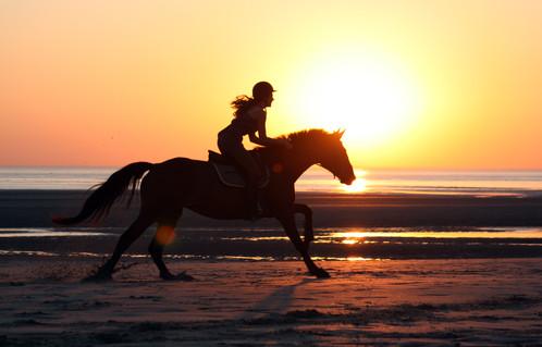 Photographe Equestre 94.jpg
