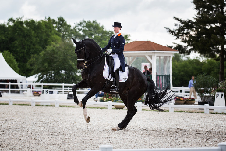 Photographe chevaux -52.jpg