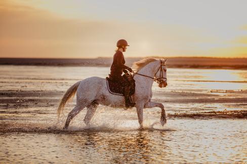Photographe Equestre 32.jpg