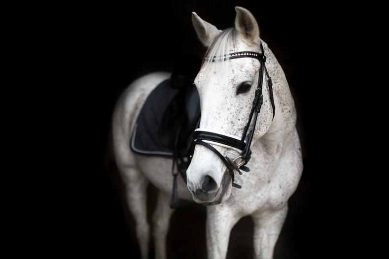 Photographe Equestre 04.jpg