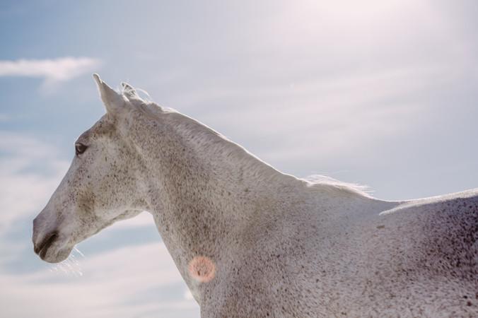 Photographe Equestre 47.jpg