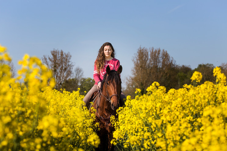 Photographe Equestre 08.jpg