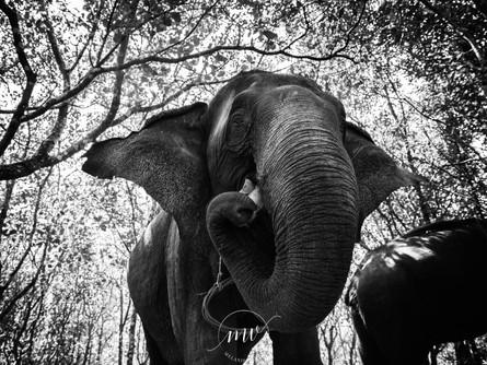 Mon fabuleux voyage au Cambodge