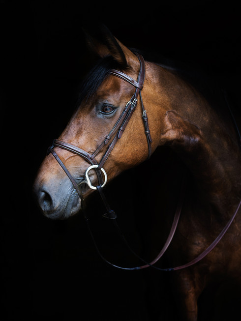 Photographe Equestre 06.jpg