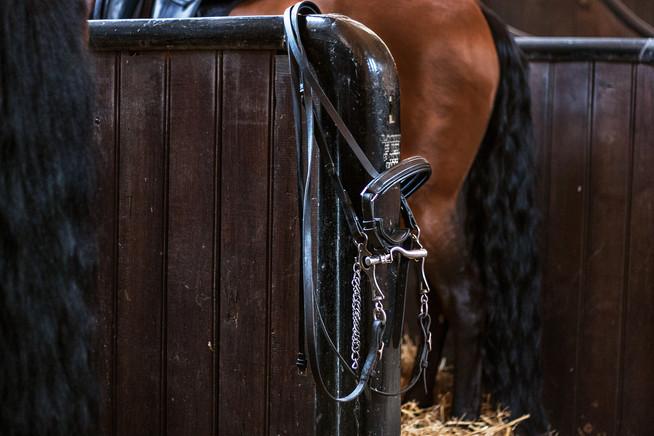 Musée vivant du cheval chantilly.jpg