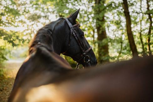 Shooting equestre Chloé -01.jpg