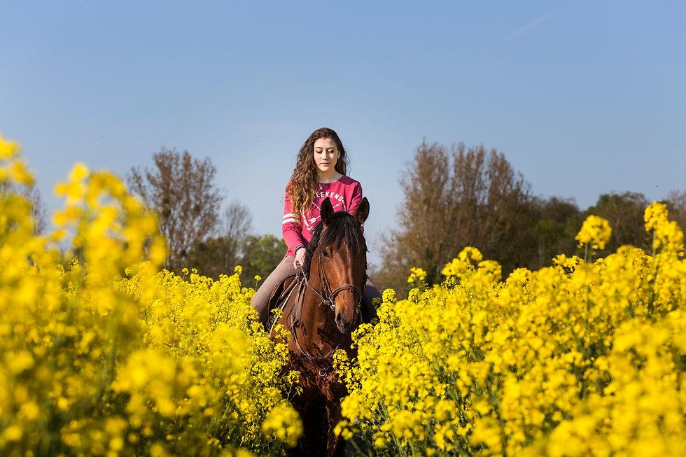 Photographe chevaux -89.jpg