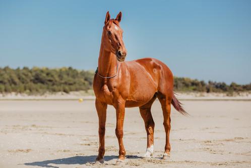 Photographe Equestre 44.jpg