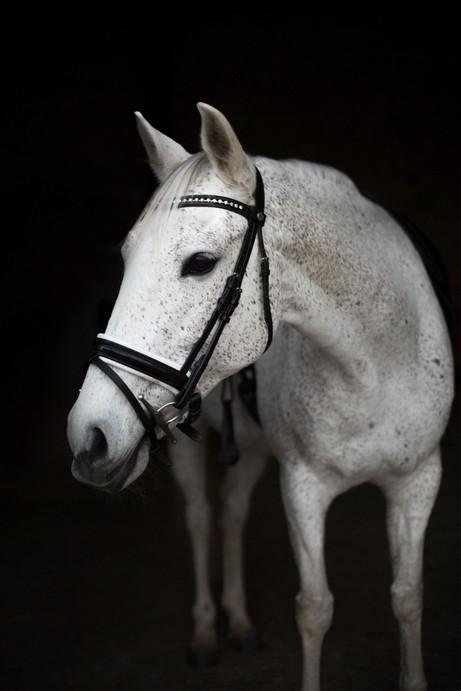 Photographe Equestre 03.jpg